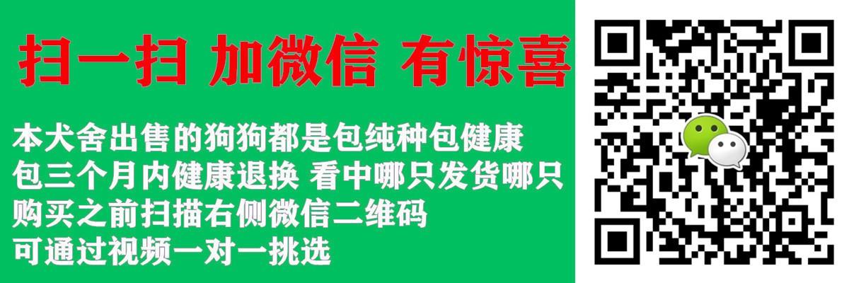 低价转让纯种九江松狮犬公母都有购买签订活体协议5