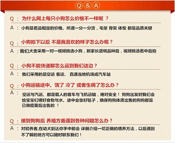 唐山专业繁殖直销出售六种颜色的泰迪犬 签署协议书6
