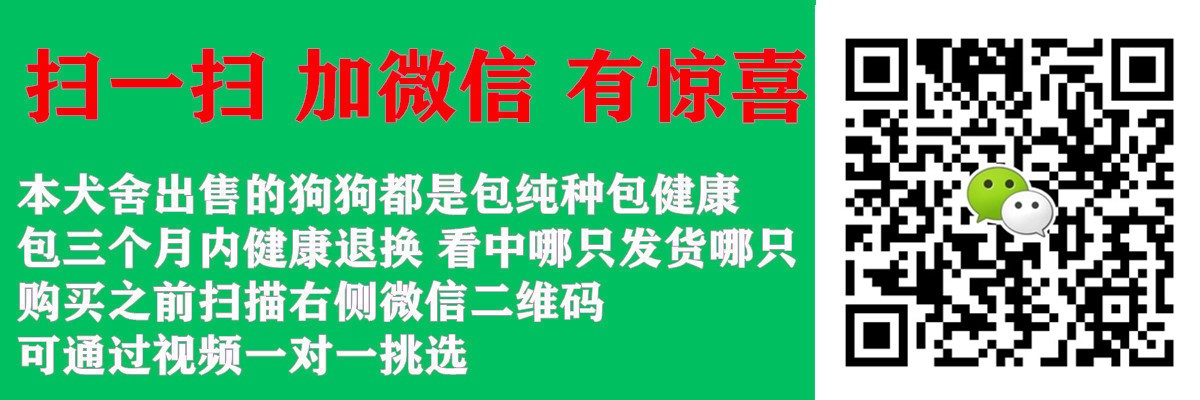 唐山专业繁殖直销出售六种颜色的泰迪犬 签署协议书5