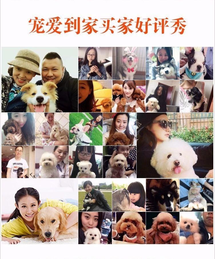 唐山专业繁殖直销出售六种颜色的泰迪犬 签署协议书7