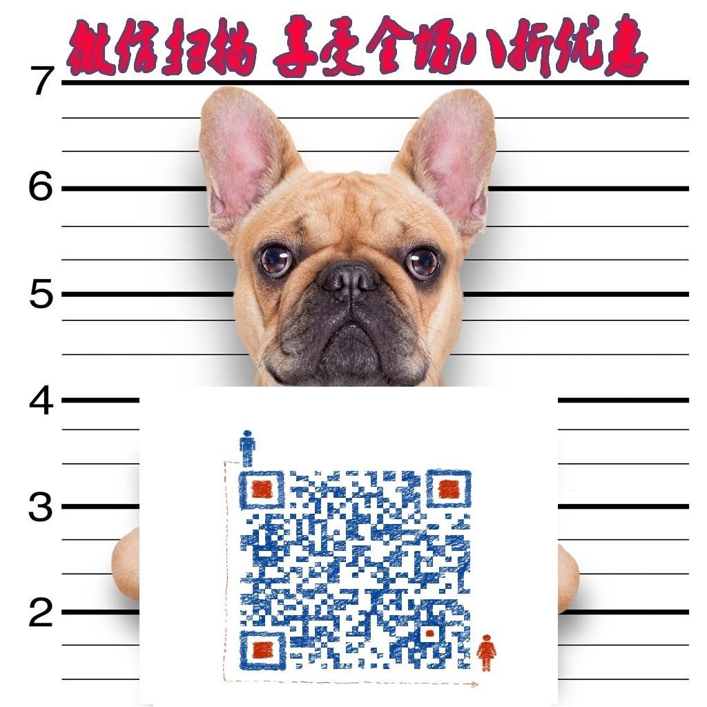纯种巴哥犬宝宝找主人微信视频看狗5