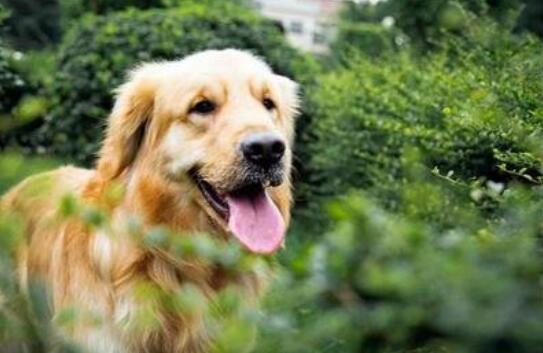 以下6种中大型犬,你想抱谁回去呢