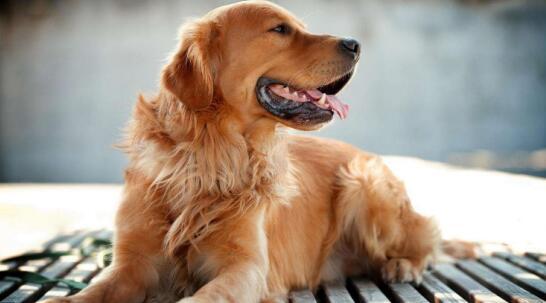如何训练狗子?做好这四点,让你不再气到爆炸