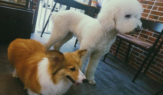 如何帮助宠物狗克服焦虑,适应新家?