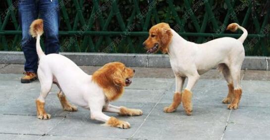 狗狗是朋友不是玩物,不要对它的皮毛动手动脚