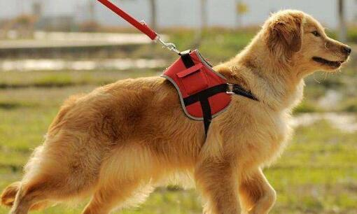 夏季遛狗要注意这三件事,否则狗狗受伤追悔莫及