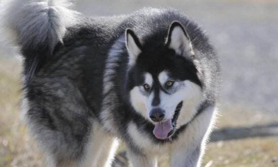 家里有两个小孩,养什么狗合适?