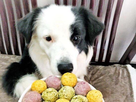 照顾宠物狗狗,给狗狗挑选食物必须要避开的几类食物