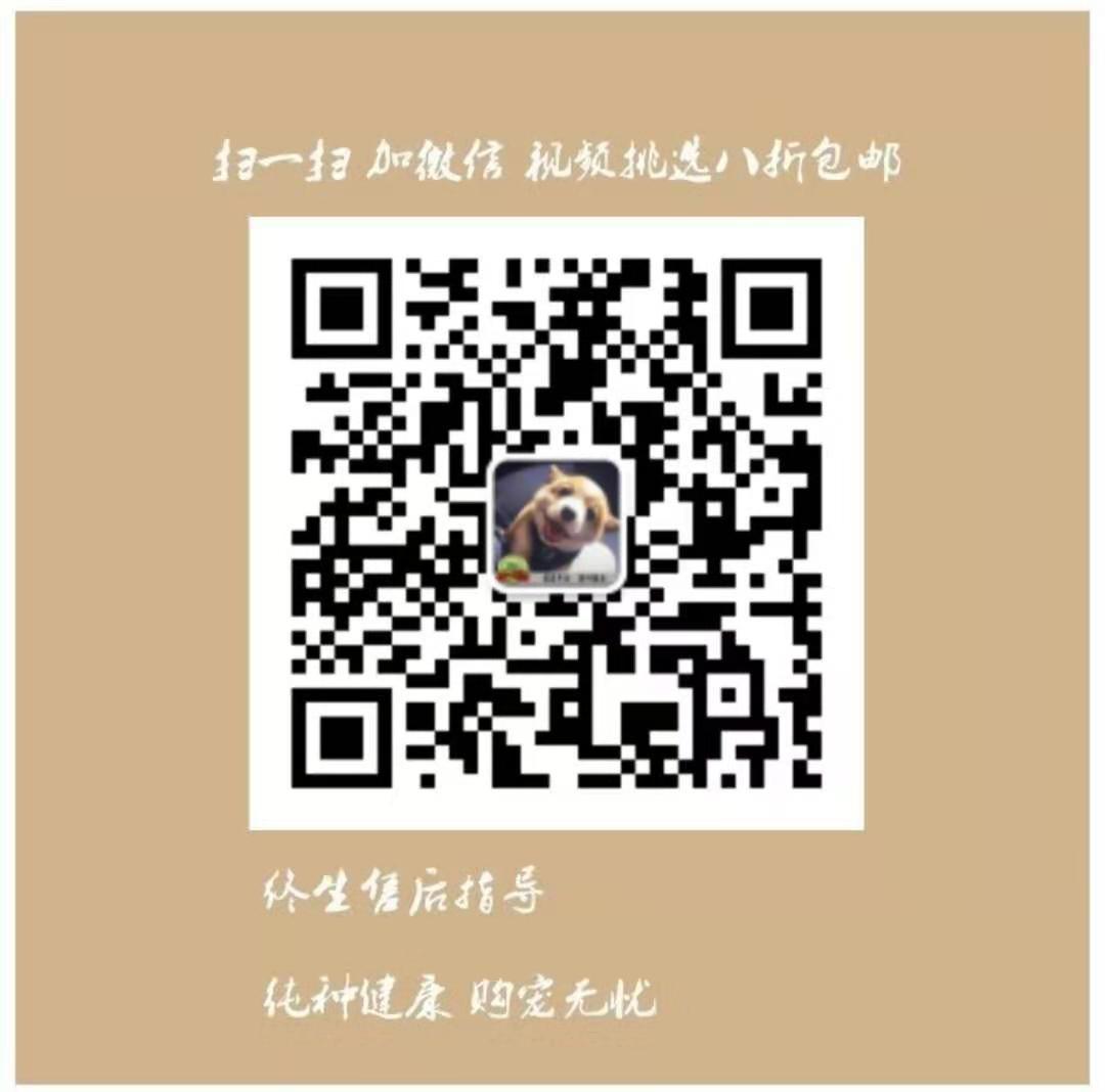 极品韩系南宁泰迪犬促销出售 有血统证书可上门挑选5