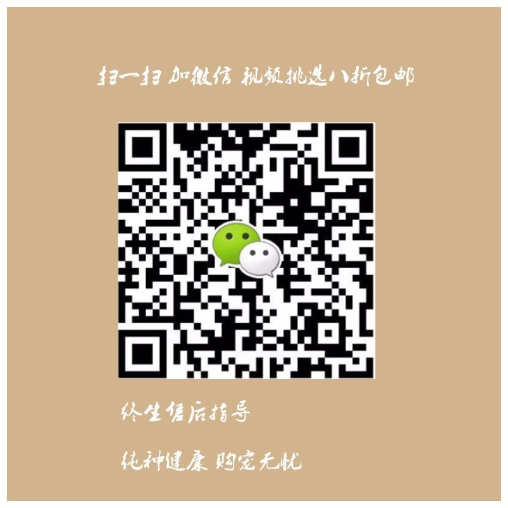 深圳自家狗场出售纯种博美犬 版型多毛色佳品种齐全12