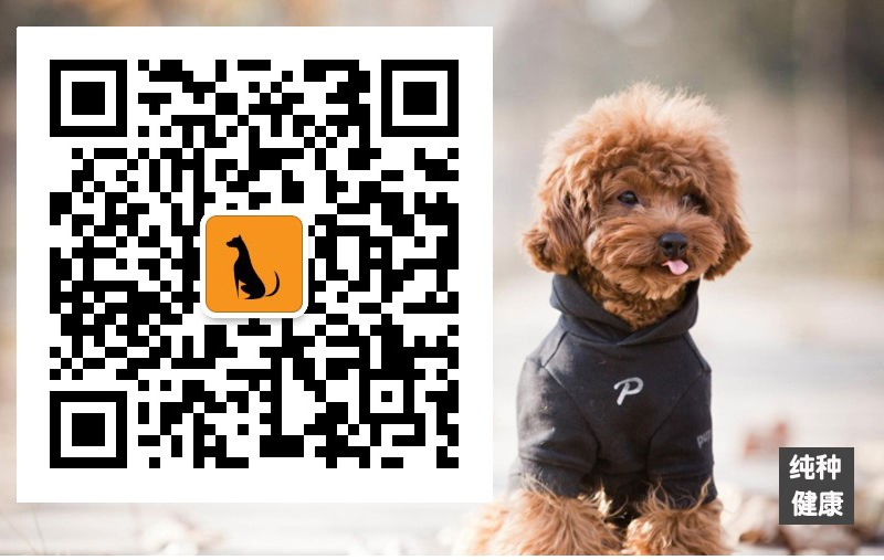 CKU认证正规繁殖圣伯纳幼犬基地纯种健康质保5