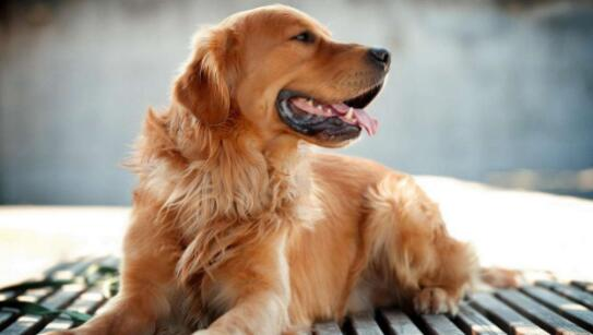 小孩想养一只宠物狗,做为家长你会同意吗
