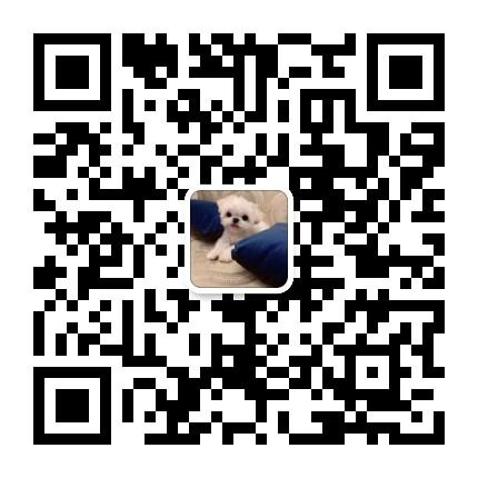 纯种德系罗威纳护卫犬幼犬出售15