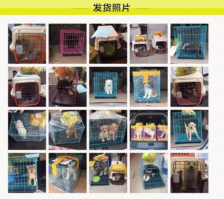 上海本地狗场出售纯种韩系贵宾犬 国外引进保证品质8