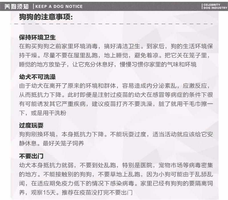 上海本地狗场出售纯种韩系贵宾犬 国外引进保证品质13