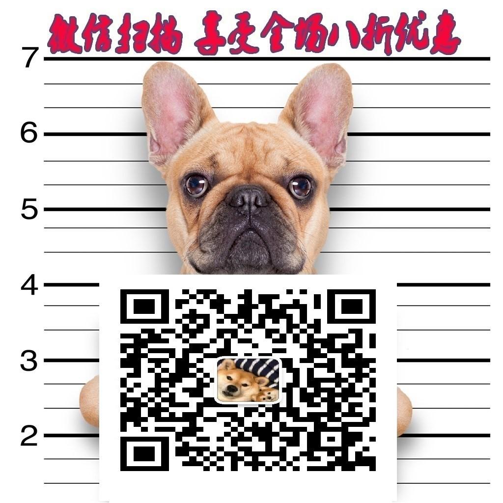 出售西施犬专业缔造完美品质质量三包多窝可选5