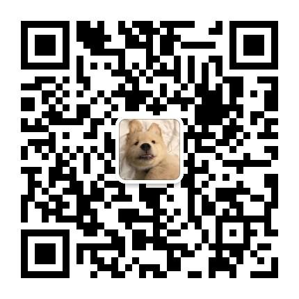 纯种阿富汗猎犬幼犬 阿富汗犬大毛量大骨架 健康灵活5