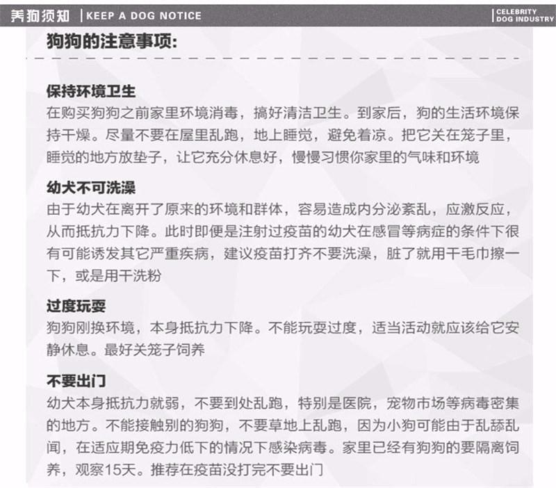 优惠价转让韩系血统西安泰迪犬 可签署售后保障协议11