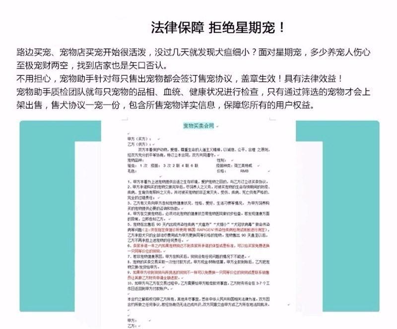 优惠价转让韩系血统西安泰迪犬 可签署售后保障协议8