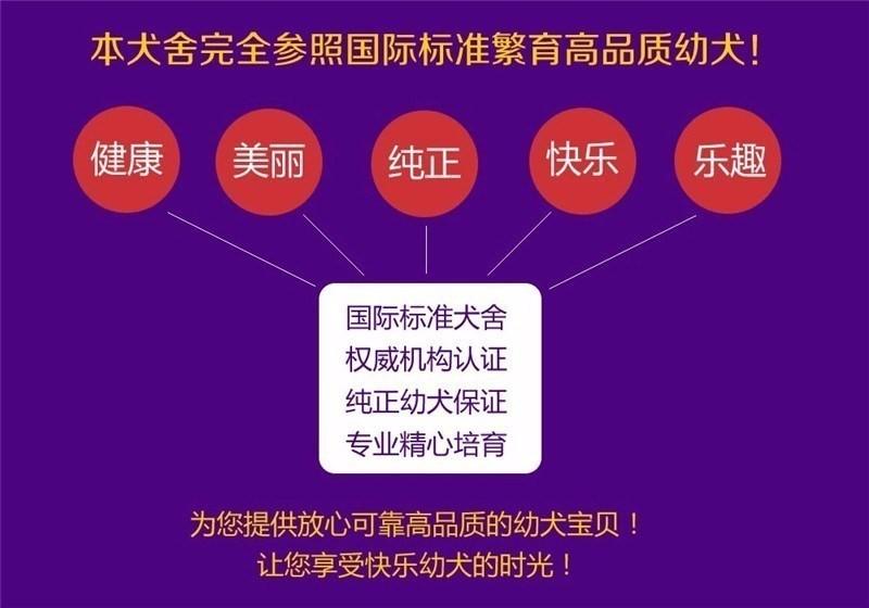 优惠价转让韩系血统西安泰迪犬 可签署售后保障协议7