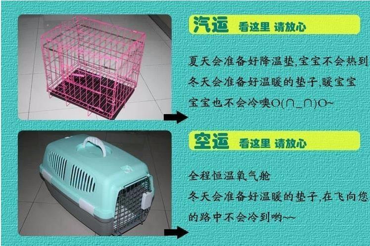 昆明狗场专业繁殖出售大毛量的博美犬 超小体好品相13