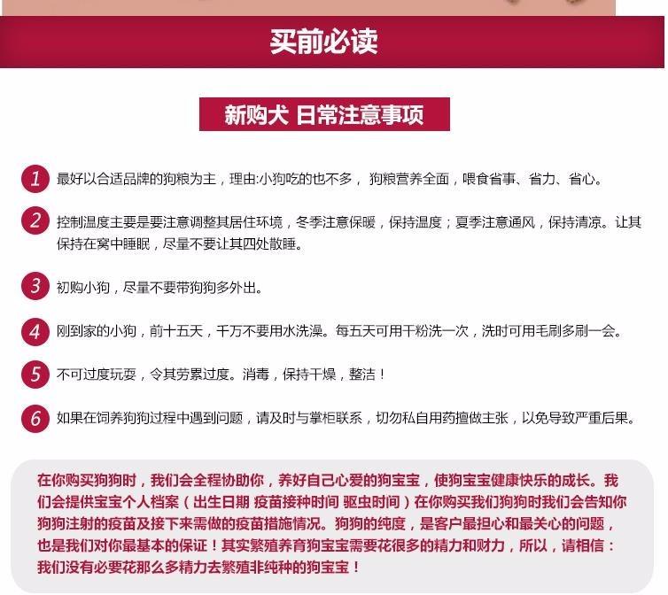 杭州繁殖舍售微笑天使萨摩耶宝宝 售后签保障协议17