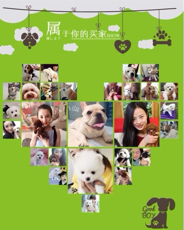 极品纯正的福州腊肠犬幼犬热销中品相一流疫苗齐全15