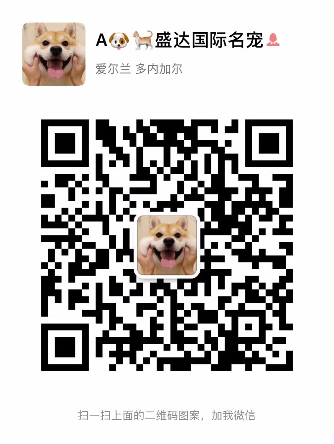 出售纯种可爱的大白熊幼犬健康保证品质一流5