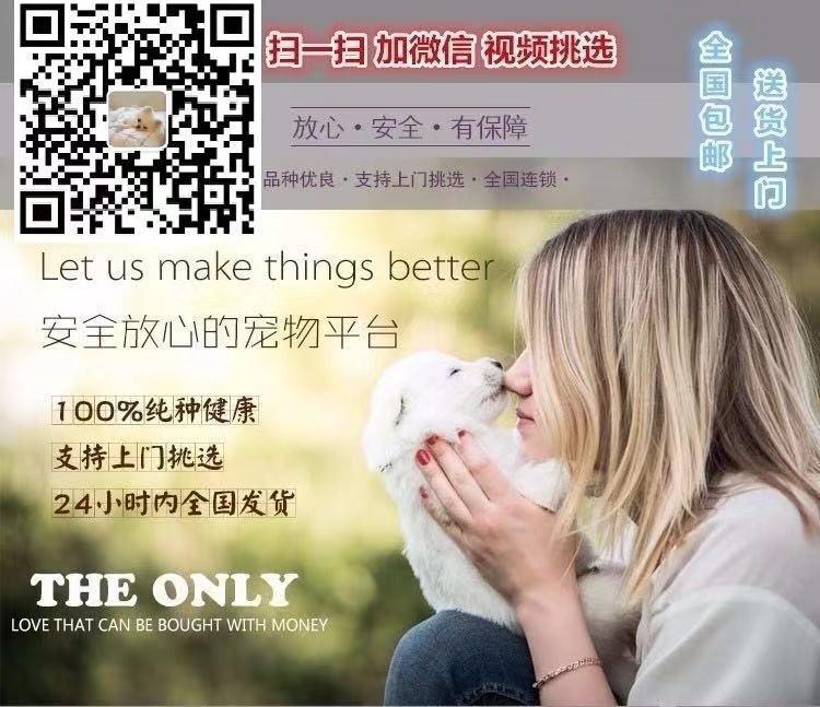 可爱至极的广州泰迪犬找新主人啦 购买可签订协5