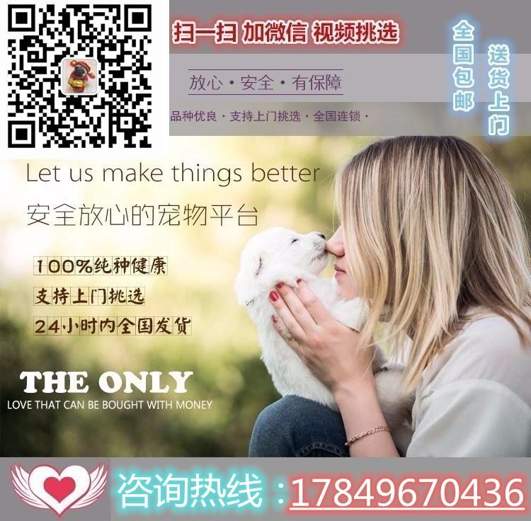 哈尔滨出售昆明犬幼犬品质好有保障专业品质一流5