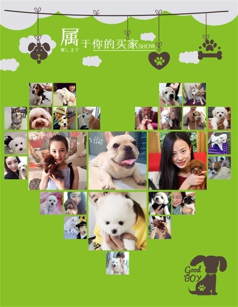 武汉犬舍直销圣伯纳犬幼犬 品相好 疫苗驱虫都已做8
