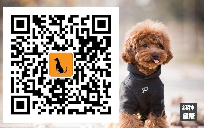 精品纯种纽芬兰犬怎么卖质量三包质保协议疫苗驱虫齐全5