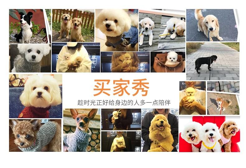 曲靖正规犬舍高品质卡斯罗犬带证书可直接视频挑选7