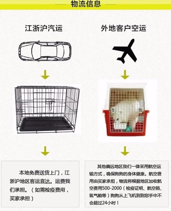 郑州直销金毛幼犬 终生包纯种包健康包养活签协议8