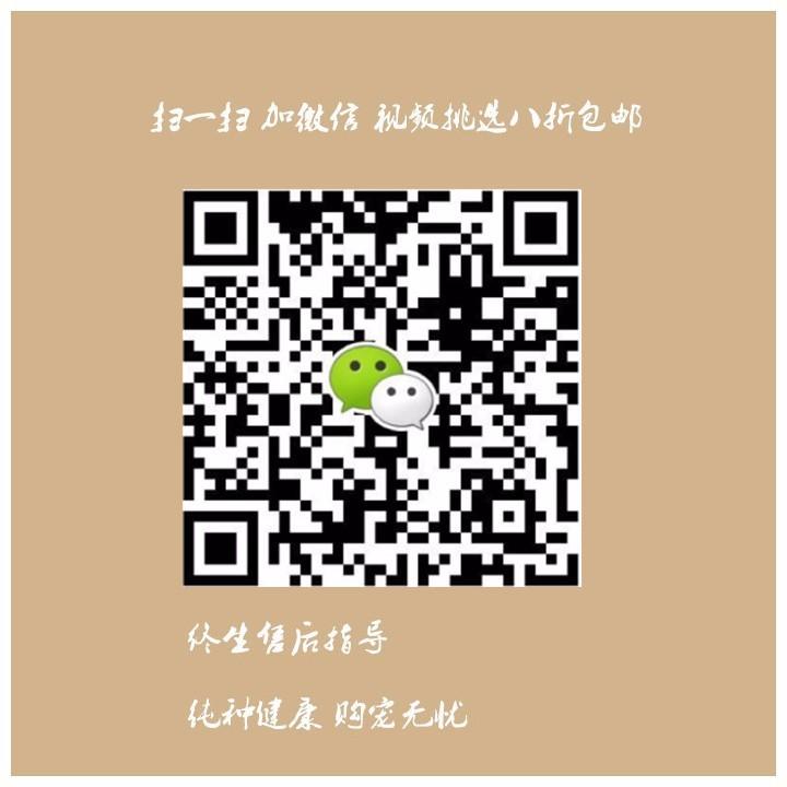 郑州直销金毛幼犬 终生包纯种包健康包养活签协议5
