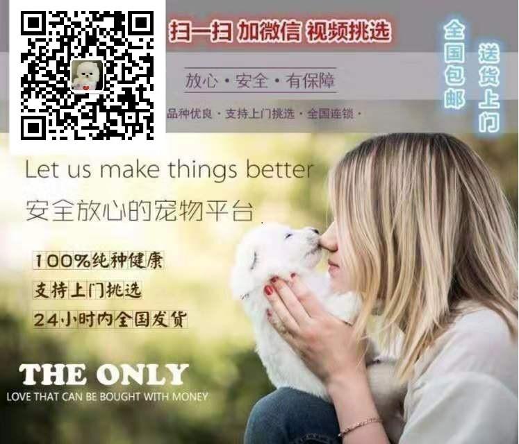 杭州自家繁殖法国斗牛犬出售公母都有真实照片视频挑选5