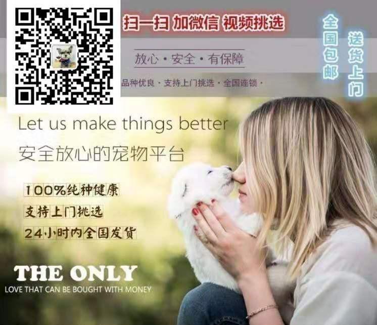 萌宠泰迪天津正在找新家 可爱调皮 百姓价格一流的品质5