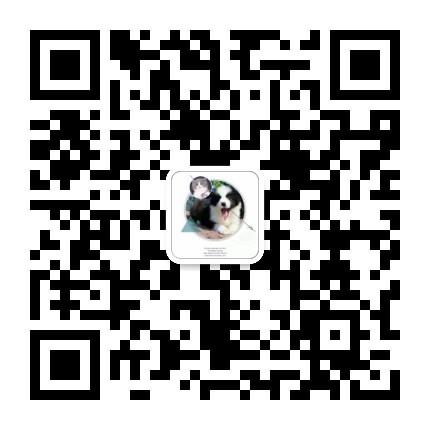 精品高品质大丹犬幼犬热卖中看父母照片喜欢加微信5