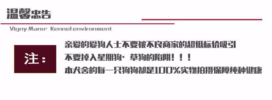深圳哪里有卖沙皮狗 沙皮狗多少钱一只8