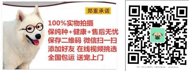 深圳哪里有卖沙皮狗 沙皮狗多少钱一只5
