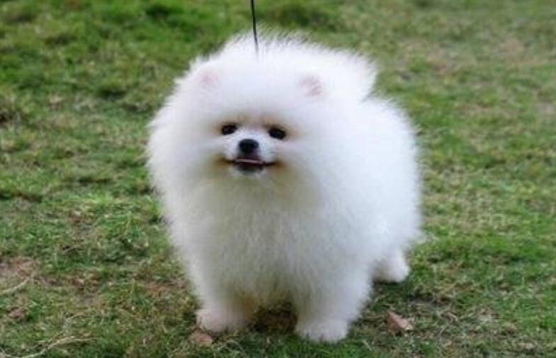 6种可爱的小型犬,有没有你喜欢的