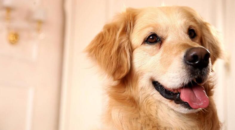 4种可爱的中大型犬,有没有哪一种你想抱回家的