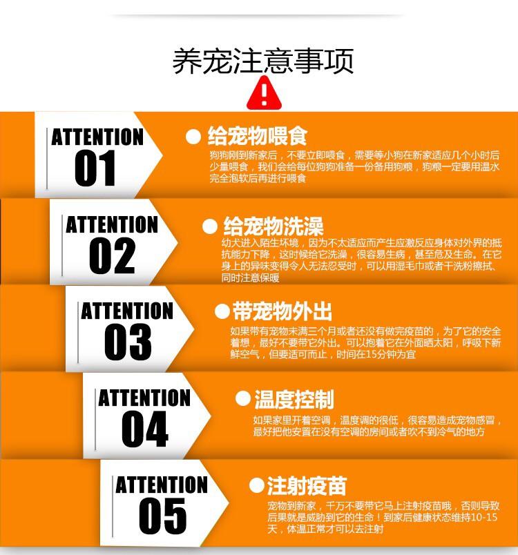 上海出售极品纯种可卡犬在这里优惠纯种和健康可签协议11