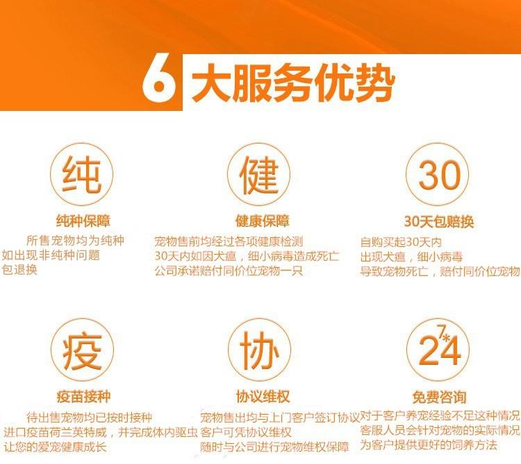 上海出售极品纯种可卡犬在这里优惠纯种和健康可签协议8