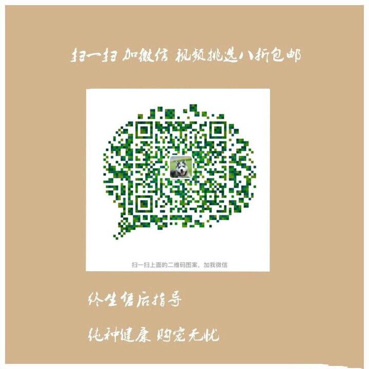 上海出售极品纯种可卡犬在这里优惠纯种和健康可签协议5