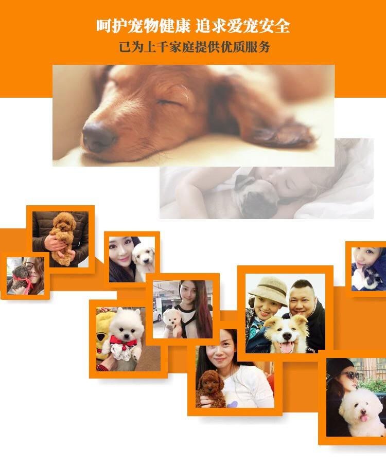 上海出售极品纯种可卡犬在这里优惠纯种和健康可签协议12