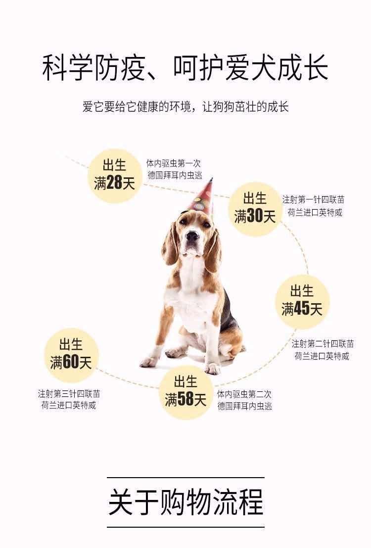 基地超低价格出售纯种大白熊幼犬,可上门选购8