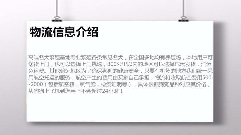 出售纯种奶油色黑白色大连斗牛犬 签订合法的销售协议12