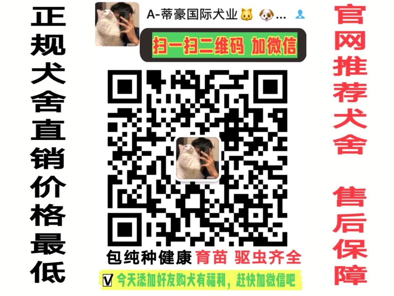 重庆纯种泰迪熊幼犬热售中 签协议送用品可送货上门5