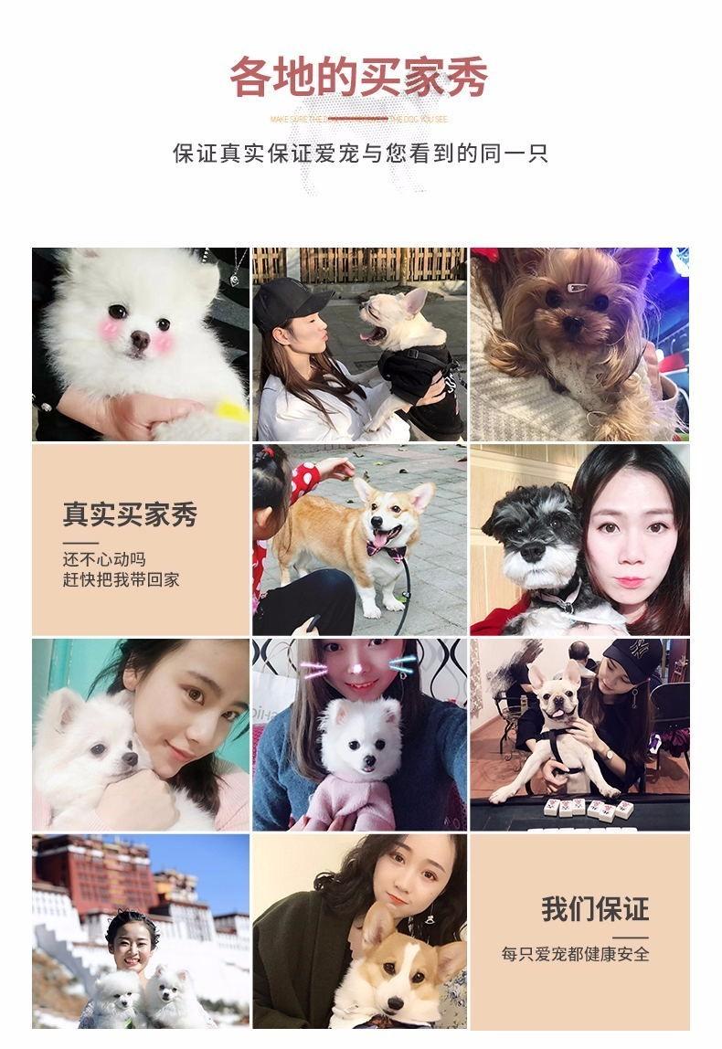 杭州出售圣伯纳幼犬。高大威猛 疫苗都已做过11